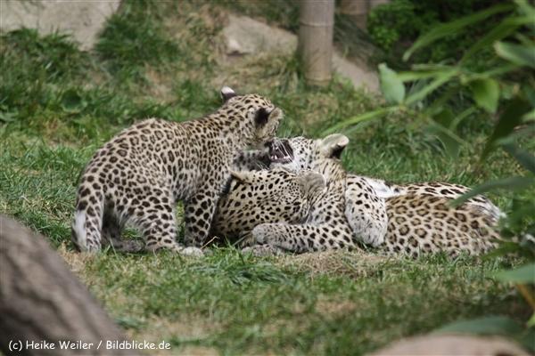 Zoo_Hannover_070912_IMG_2940