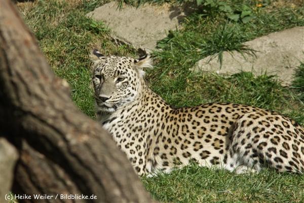 Zoo_Hannover_070912_IMG_2999