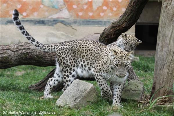 Zoo_Hannover_070912_IMG_3142