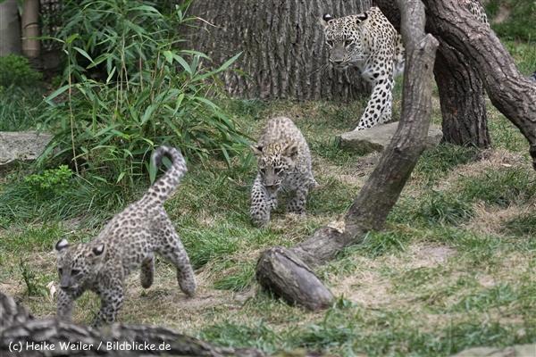 Zoo_Hannover_070912_IMG_3178