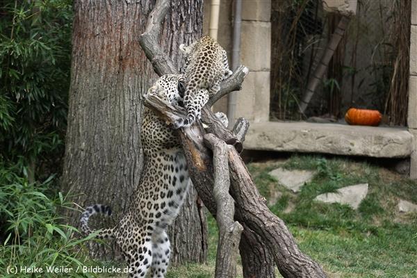 Zoo_Hannover_070912_IMG_3191