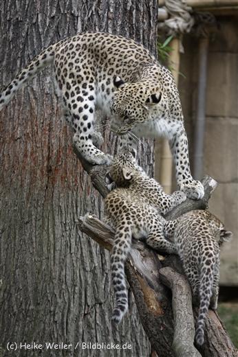 Zoo_Hannover_070912_IMG_3236