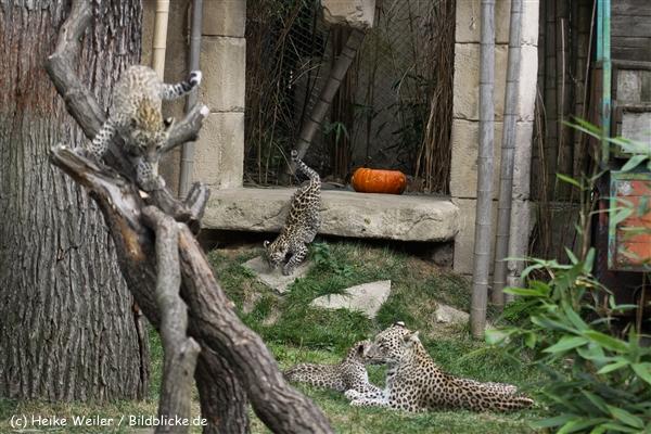 Zoo_Hannover_070912_IMG_3315
