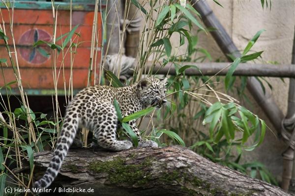 Zoo_Hannover_070912_IMG_3337