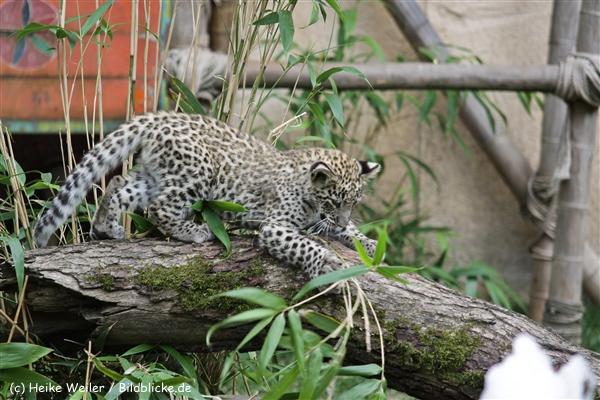 Zoo_Hannover_070912_IMG_3344