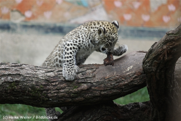 Zoo_Hannover_070912_IMG_3396
