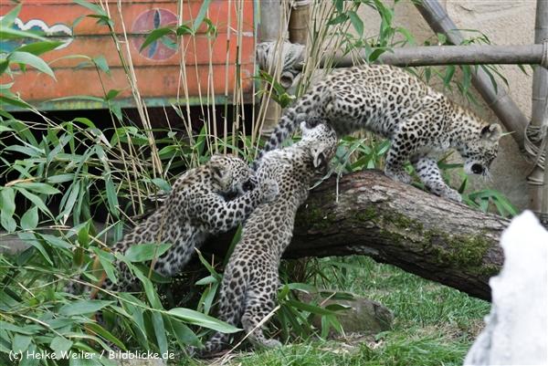 Zoo_Hannover_070912_IMG_3410