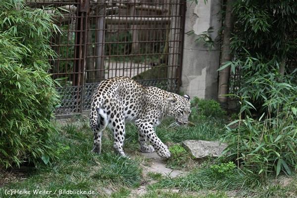 Zoo_Hannover_070912_IMG_3442