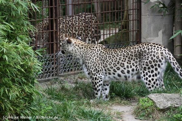 Zoo_Hannover_070912_IMG_3453