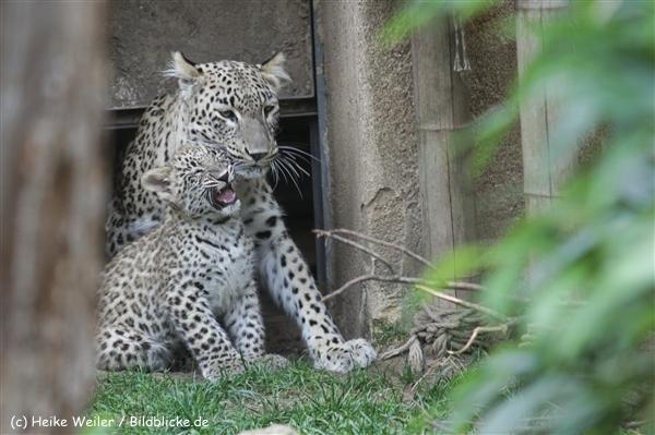 Zoo_Hannover_070912_IMG_3532