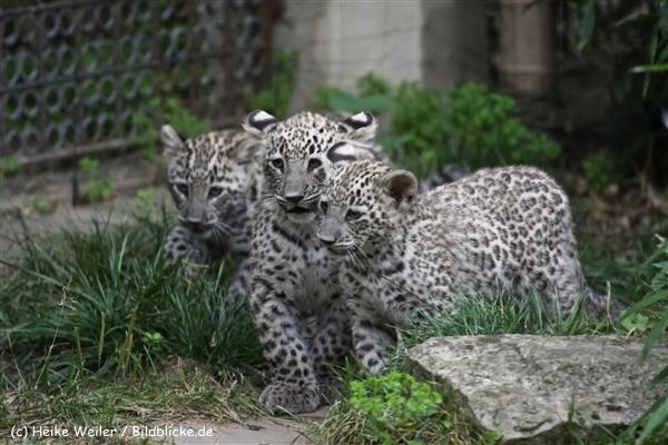 Zoo_Hannover_070912_IMG_3646