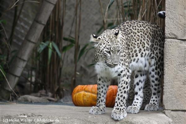 Zoo_Hannover_070912_IMG_3653