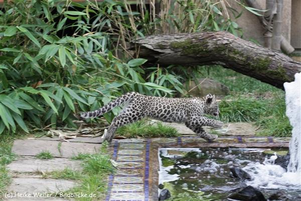 Zoo_Hannover_070912_IMG_3693