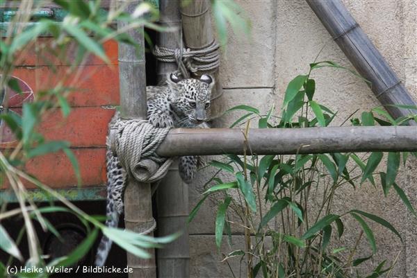 Zoo_Hannover_070912_IMG_3714