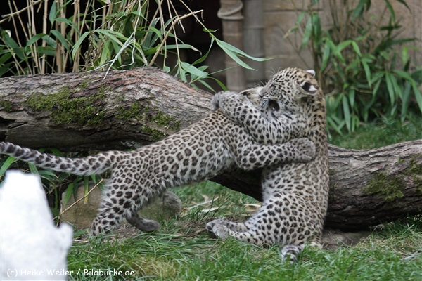 Zoo_Hannover_070912_IMG_3768