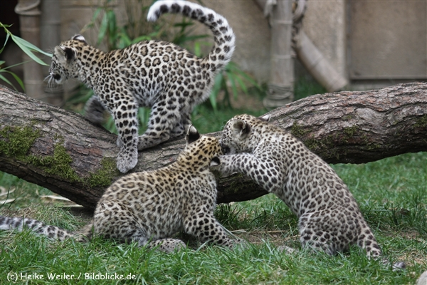 Zoo_Hannover_070912_IMG_3775