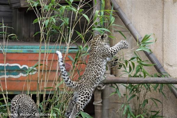 Zoo_Hannover_070912_IMG_3826