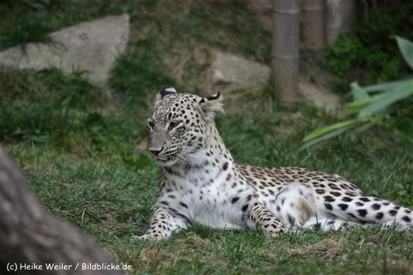 Zoo_Hannover_070912_IMG_3866