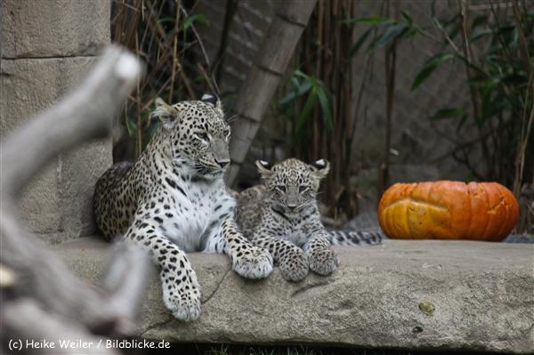 Zoo_Hannover_070912_IMG_3944