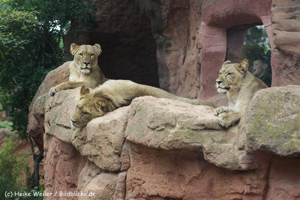 Zoo_Hannover_070912_IMG_3954