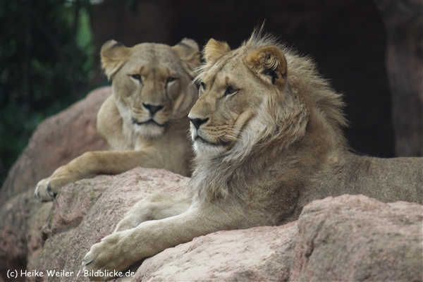 Zoo_Hannover_070912_IMG_3965