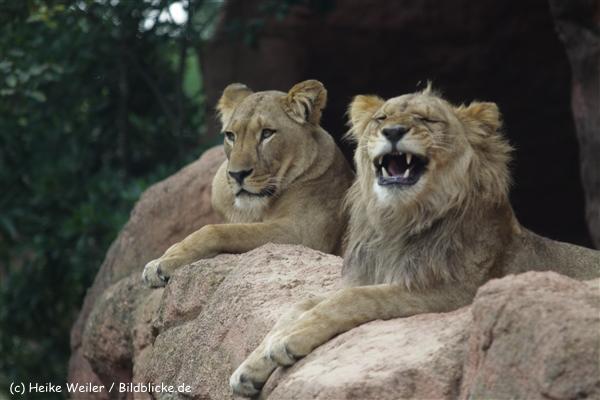 Zoo_Hannover_070912_IMG_3981