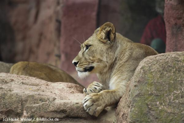 Zoo_Hannover_070912_IMG_3984