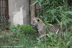 Zoo_Hannover_070912_IMG_3175