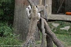 Zoo_Hannover_070912_IMG_3209