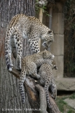 Zoo_Hannover_070912_IMG_3220