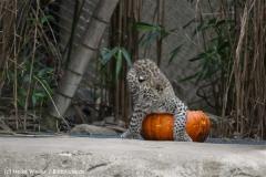Zoo_Hannover_070912_IMG_3259