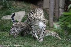 Zoo_Hannover_070912_IMG_3297