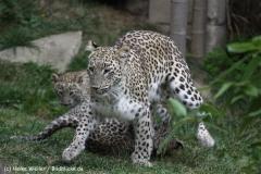 Zoo_Hannover_070912_IMG_3299