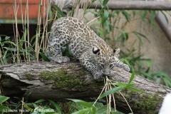 Zoo_Hannover_070912_IMG_3348