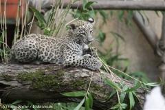 Zoo_Hannover_070912_IMG_3359