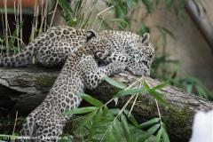 Zoo_Hannover_070912_IMG_3368