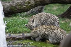 Zoo_Hannover_070912_IMG_3376