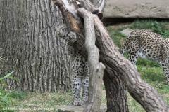 Zoo_Hannover_070912_IMG_3504