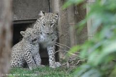 Zoo_Hannover_070912_IMG_3533
