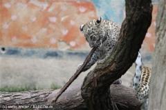 Zoo_Hannover_070912_IMG_3573