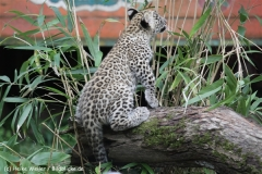 Zoo_Hannover_070912_IMG_3607