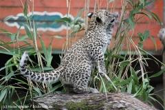 Zoo_Hannover_070912_IMG_3610