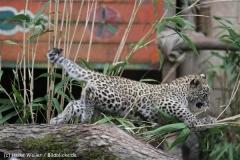 Zoo_Hannover_070912_IMG_3613