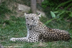 Zoo_Hannover_070912_IMG_3639