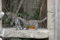 Zoo_Hannover_070912_IMG_3665