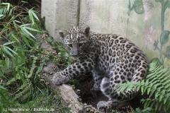 Zoo_Hannover_070912_IMG_3706