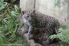 Zoo_Hannover_070912_IMG_3710