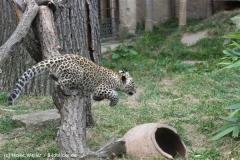 Zoo_Hannover_070912_IMG_3728