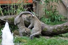 Zoo_Hannover_070912_IMG_3767