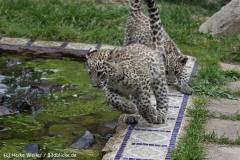Zoo_Hannover_070912_IMG_3829